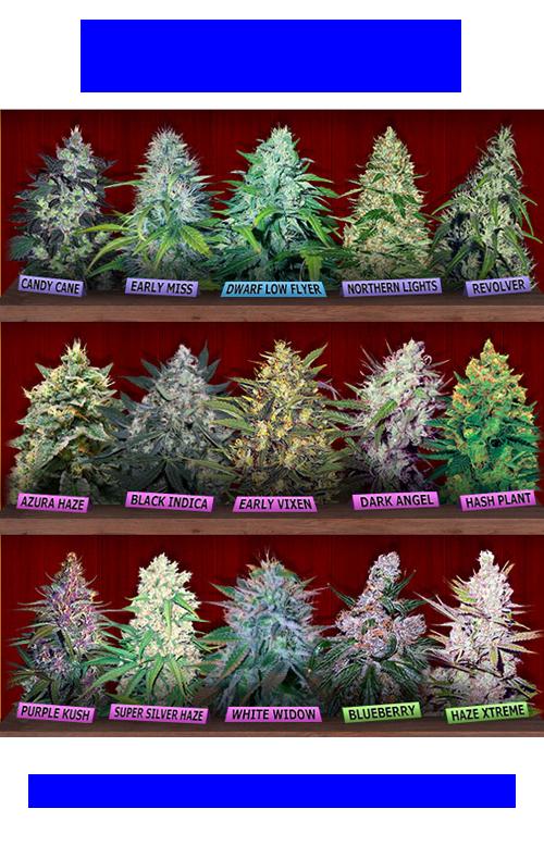 Cannabis Canadians Seeds